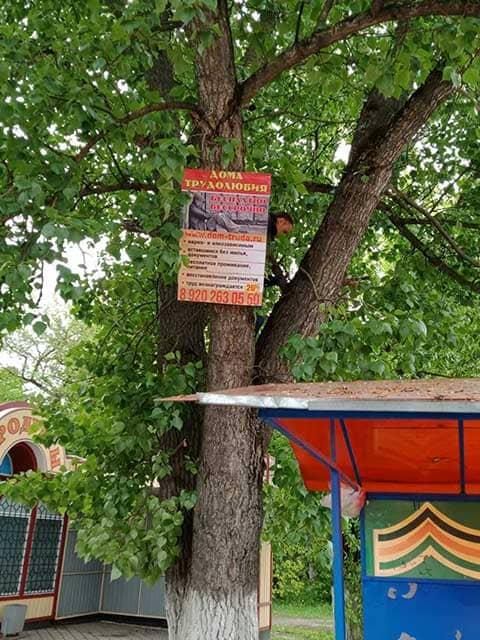 rukovoditel-priyuta-dlya-bezdomnyh-lyudey-krepit-plakat